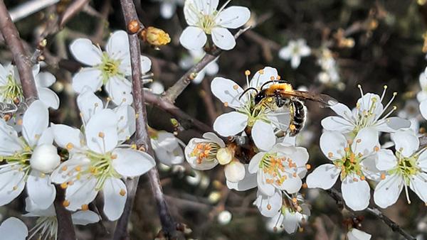 Lebensraum für Insekten und Bienen