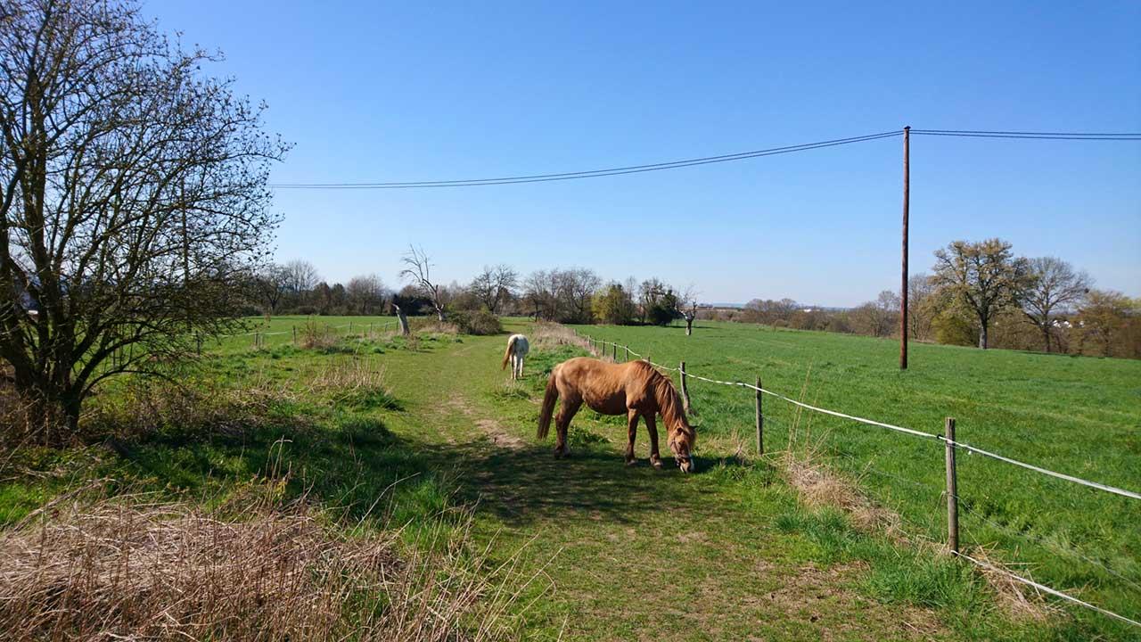 Pferdebeweidung Arzheimer Schanze